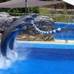 Dolphin Activities You Can Enjoy in Dubai