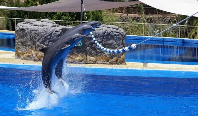 List of Activities You Can Enjoy With Dolphins in UAE